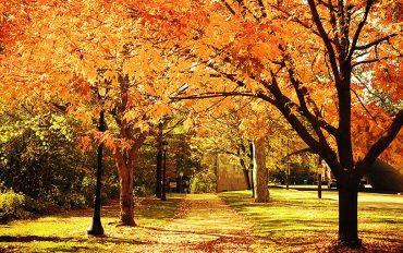 Wir wünschen Ihnen eine angenehme Herbstzeit